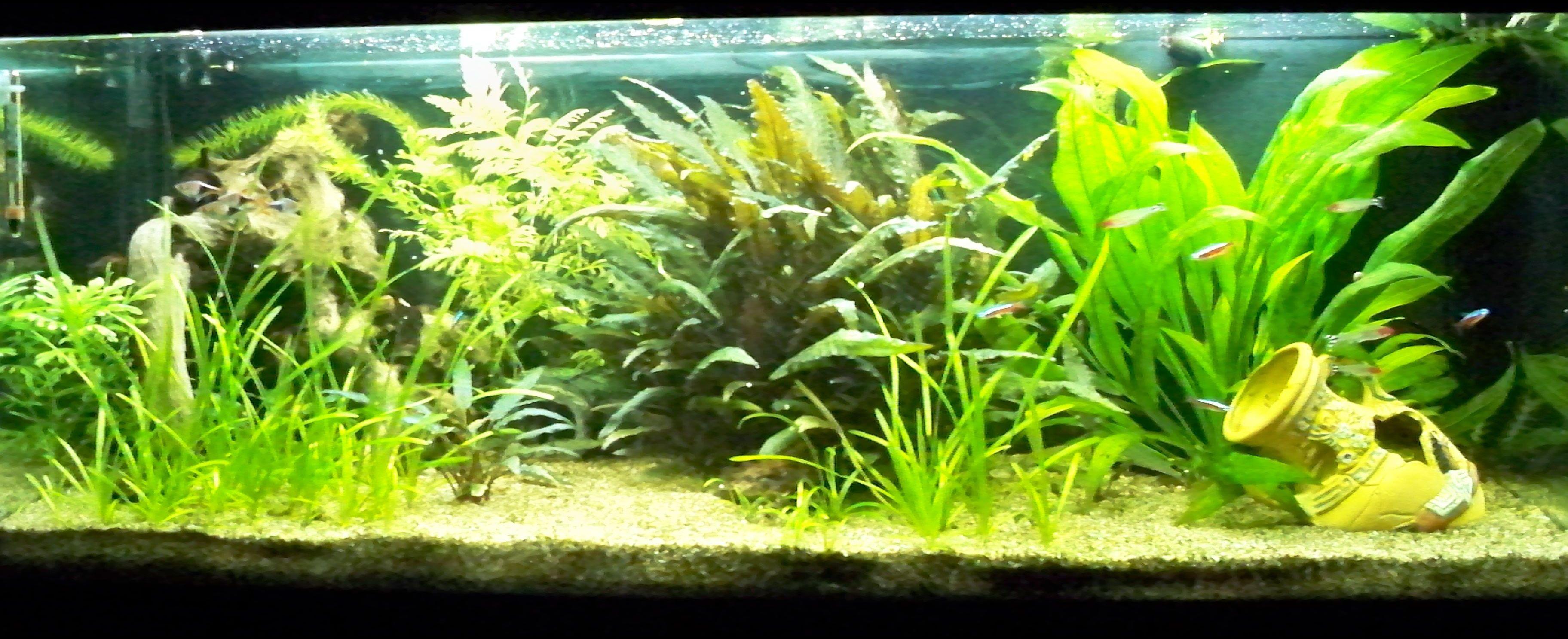 Cichlides malawi 33 le forum des passionn s des cichlid s for Bac communautaire poisson rouge