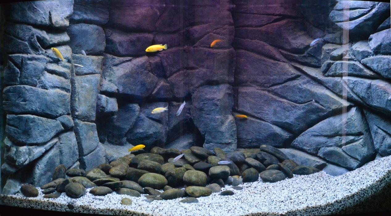 Decor Fond Aquarium Juwel